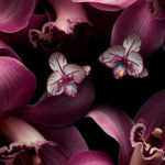 Isabelle Bonjean Chopard Orchidees 1