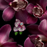 Isabelle Bonjean Chopard Orchidees 3