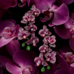 Isabelle Bonjean Chopard Orchidees 4